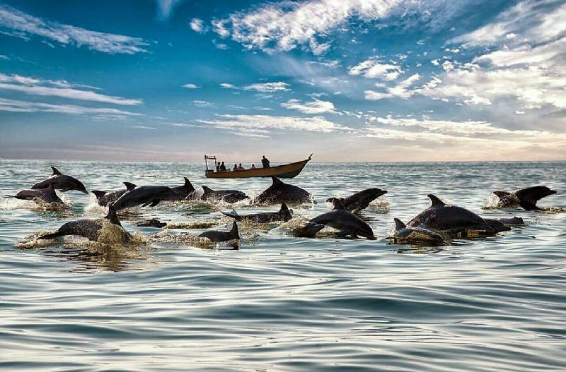 Dolphins of Hengam Islnad