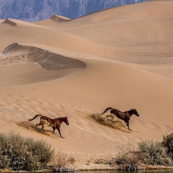 Explore the Silk Road