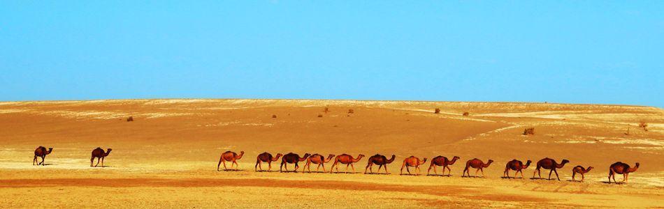 Maranjab Desert - Painting outdoor